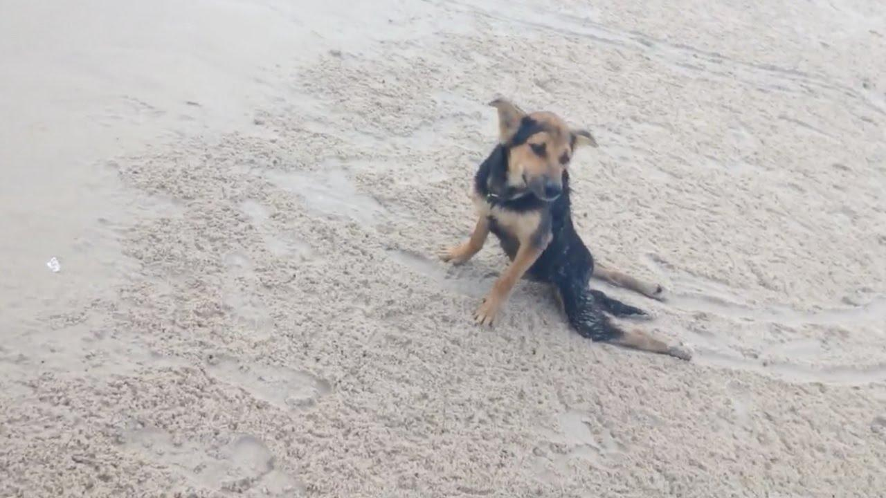 Paralyzed Stray Dog Found On Beach Thriving In New Home